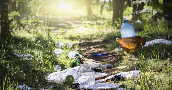 Ilustracja do informacji: Śmieci w lesie